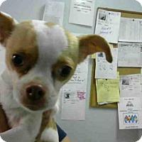 Adopt A Pet :: HONEY - Atlanta, GA