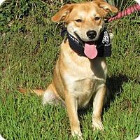 Adopt A Pet :: Festus - Oakland, AR