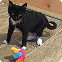 Adopt A Pet :: Carolina - Fort Collins, CO