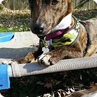 Adopt A Pet :: Woody - Hillside, IL