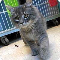 Adopt A Pet :: Van - Oskaloosa, IA