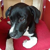 Adopt A Pet :: Cece - Tampa, FL