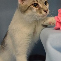 Adopt A Pet :: Nemo - Morgantown, WV