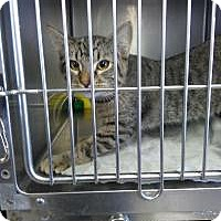 Adopt A Pet :: BAker - Sauk Rapids, MN