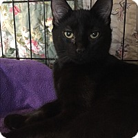 Adopt A Pet :: Inky - Lafayette, NJ