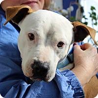 Adopt A Pet :: Carmen - Troy, MI