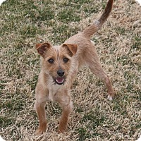 Adopt A Pet :: Abby - Henderson, NV