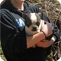 Adopt A Pet :: Becca - Antioch, IL