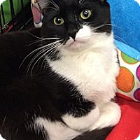 Adopt A Pet :: Tantor - Port Republic, MD