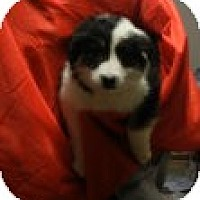 Adopt A Pet :: Berne - Antioch, IL