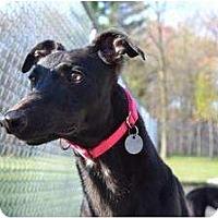 Adopt A Pet :: Chanel (El Chanel) - Chagrin Falls, OH