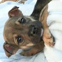 Adopt A Pet :: Baby Polly - Marlton, NJ