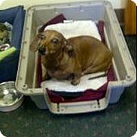 Adopt A Pet :: TRINI - Portland, OR