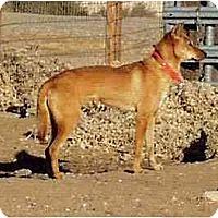 Adopt A Pet :: HyeHwa - Southern California, CA