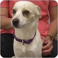 Adopt A Pet :: Gavin - Phoenix, AZ