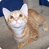 Adopt A Pet :: K-Maddie2-Orange Blossom - Colorado Springs, CO
