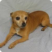 Adopt A Pet :: Mitch - Gary, IN
