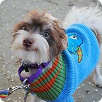 Adopt A Pet :: Zion - Sherman Oaks, CA