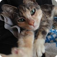 Adopt A Pet :: Lorna - Brooklyn, NY