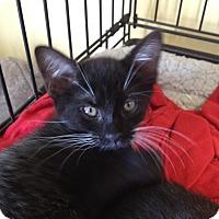 Adopt A Pet :: Olivia - Island Park, NY