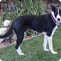 Adopt A Pet :: AIMEE - San Pedro, CA