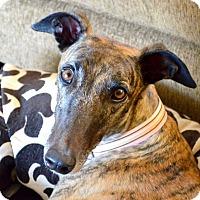 Adopt A Pet :: Malena - Tucson, AZ