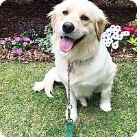 Adopt A Pet :: Sassy - BIRMINGHAM, AL