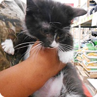 Adopt A Pet :: Bond - Parkton, NC