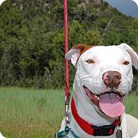 Adopt A Pet :: Razzle - Ridgway, CO