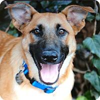 Adopt A Pet :: BREEZE VON ZENZI - Los Angeles, CA