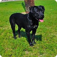Adopt A Pet :: Gunner-062112j - Tupelo, MS