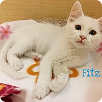 Adopt A Pet :: Fitz - Foothill Ranch, CA