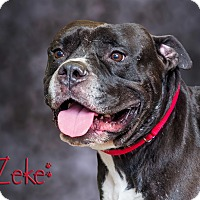 Adopt A Pet :: Zeke - Somerset, PA