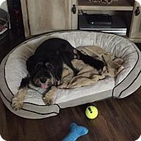 Adopt A Pet :: Margo - Jarrell, TX