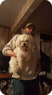 Shih Tzu Mix Dog for adoption in Inver Grove, Minnesota - Sasha(PENDING)