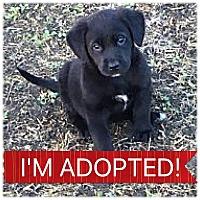 Adopt A Pet :: Happ - Regina, SK