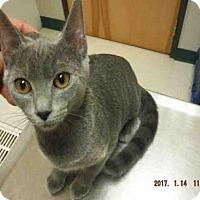 Adopt A Pet :: A572385 - Oroville, CA