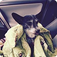 Adopt A Pet :: Tyler - FORT WORTH, TX