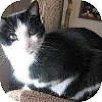 Adopt A Pet :: Ellery - Powell, OH