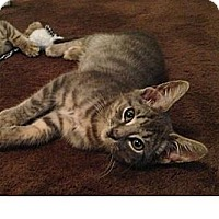 Adopt A Pet :: Chance - South Plainfield, NJ
