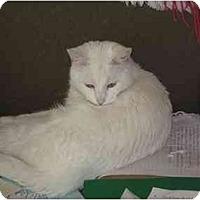 Adopt A Pet :: Sir Galahad - Jacksonville, NC