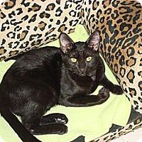 Adopt A Pet :: Ricky Ricardo - Phoenix, AZ