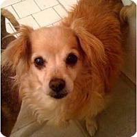 Adopt A Pet :: Rose - Fowler, CA