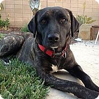 Adopt A Pet :: GYPSY - Torrance, CA