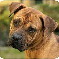 Adopt A Pet :: Meg - Chicago, IL