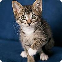 Adopt A Pet :: Nigel - Eagan, MN