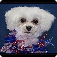 Adopt A Pet :: Darling Lil - Fort Braff, CA