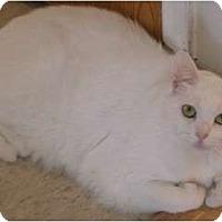 Adopt A Pet :: Mum - Monroe, GA
