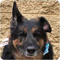 Adopt A Pet :: Monte - Gilbert, AZ