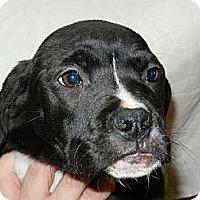 Adopt A Pet :: Tiana - South Jersey, NJ